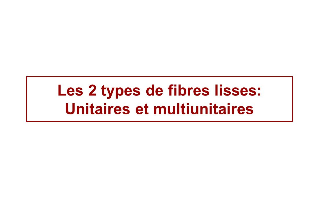 Les 2 types de fibres lisses: Unitaires et multiunitaires