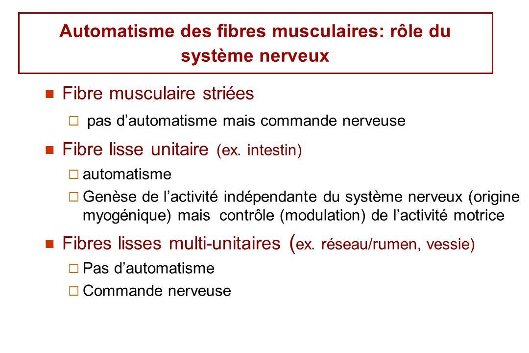 Automatisme des fibres musculaires: rôle du système nerveux