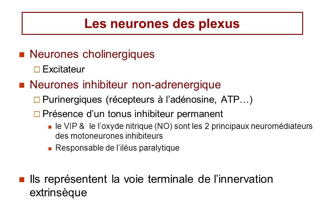 Les neurones des plexus