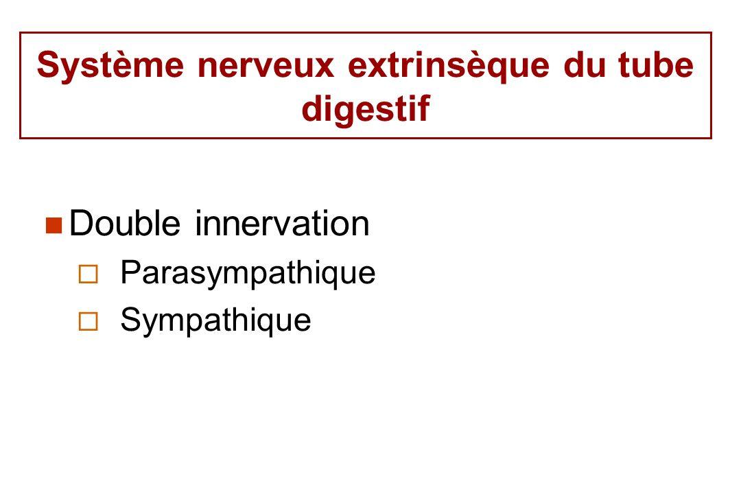 Système nerveux extrinsèque du tube digestif