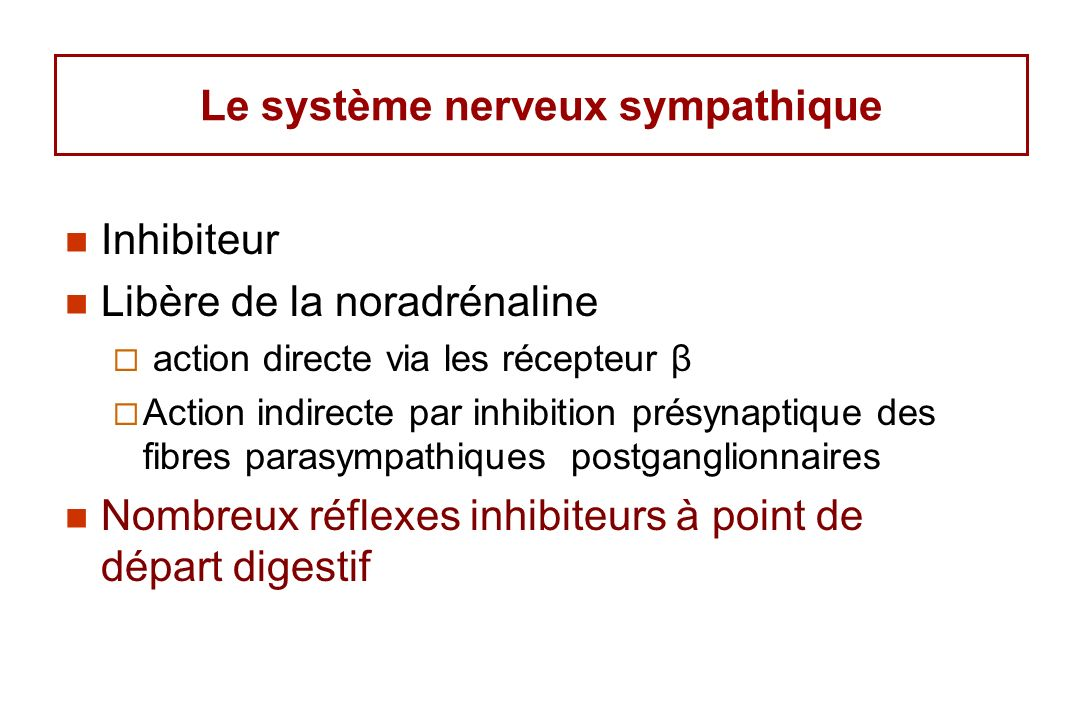 Le système nerveux sympathique