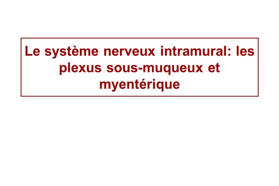 Le système nerveux intramural: les plexus sous-muqueux et myentérique