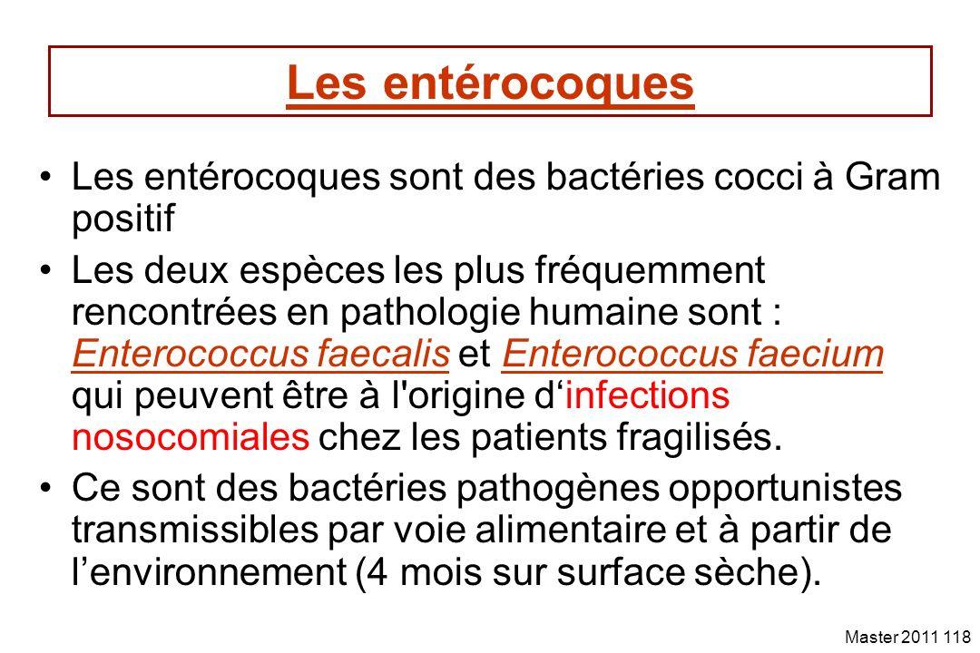 Les entérocoques Les entérocoques sont des bactéries cocci à Gram positif.