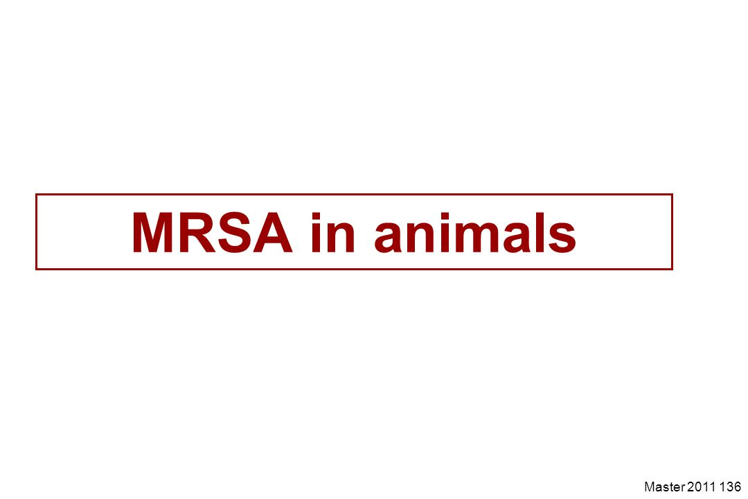 MRSA in animals