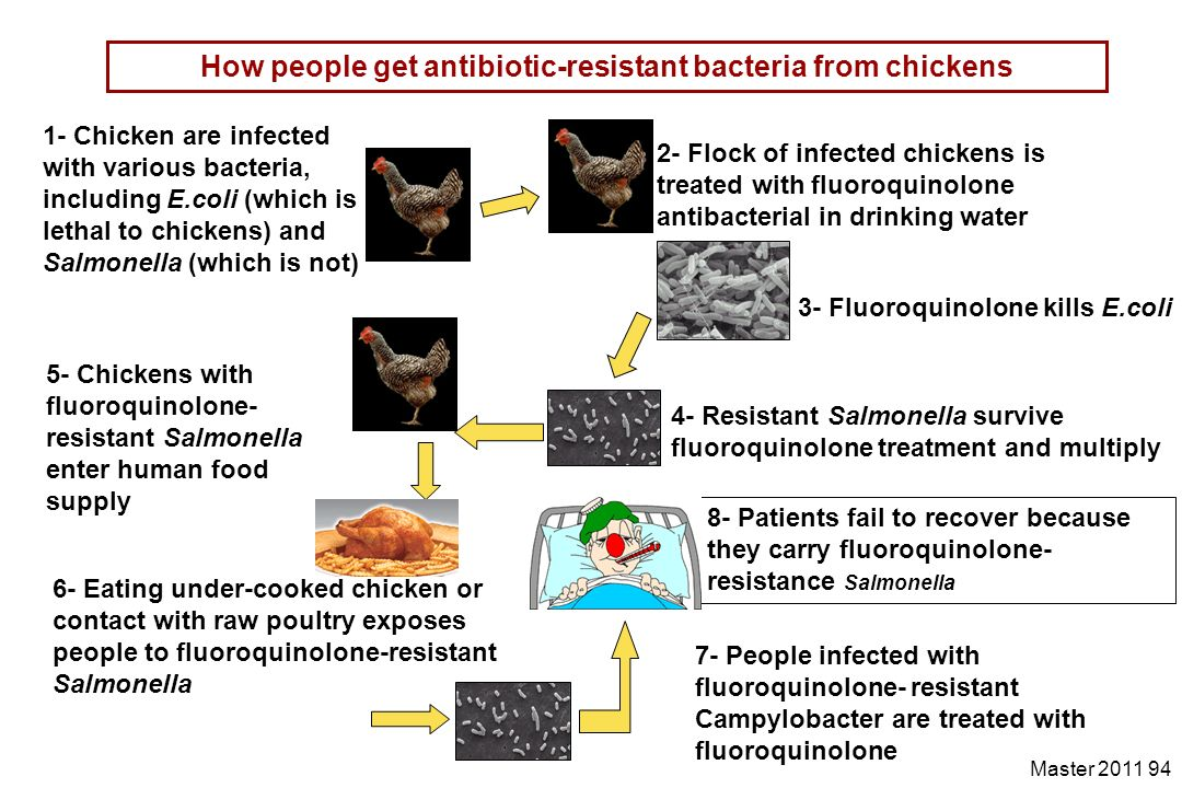 How people get antibiotic-resistant bacteria from chickens
