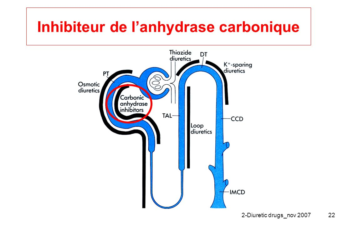 Inhibiteur de l'anhydrase carbonique