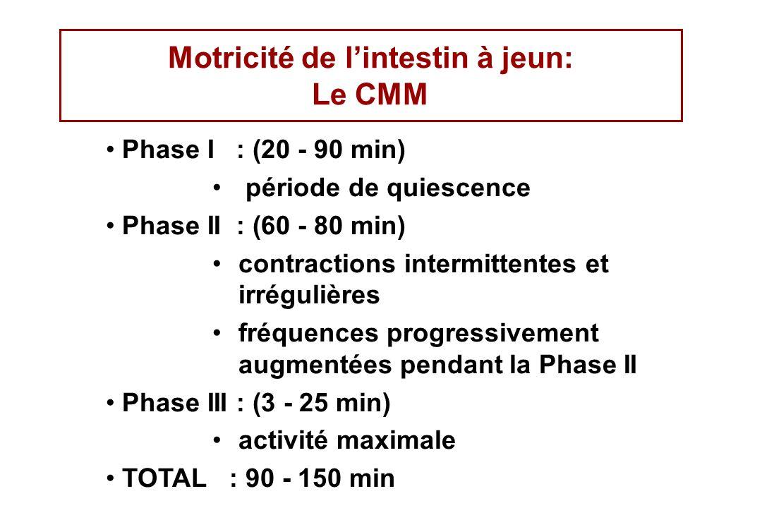 Motricité de l'intestin à jeun: Le CMM