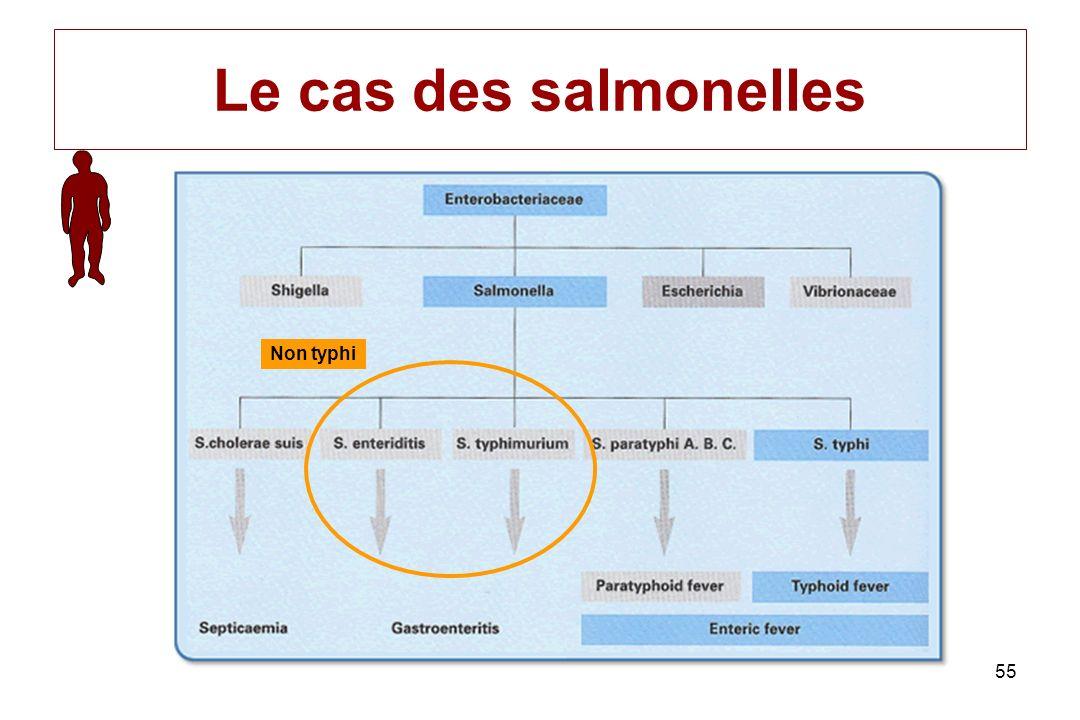 Le cas des salmonelles Non typhi