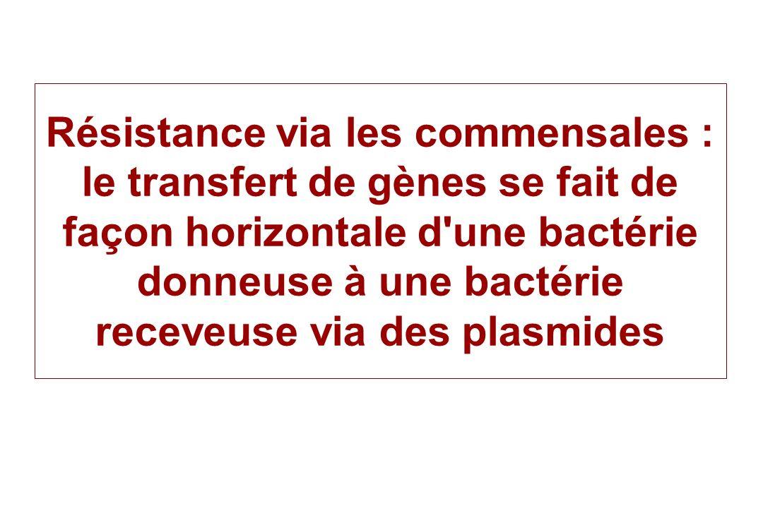 Résistance via les commensales : le transfert de gènes se fait de façon horizontale d une bactérie donneuse à une bactérie receveuse via des plasmides