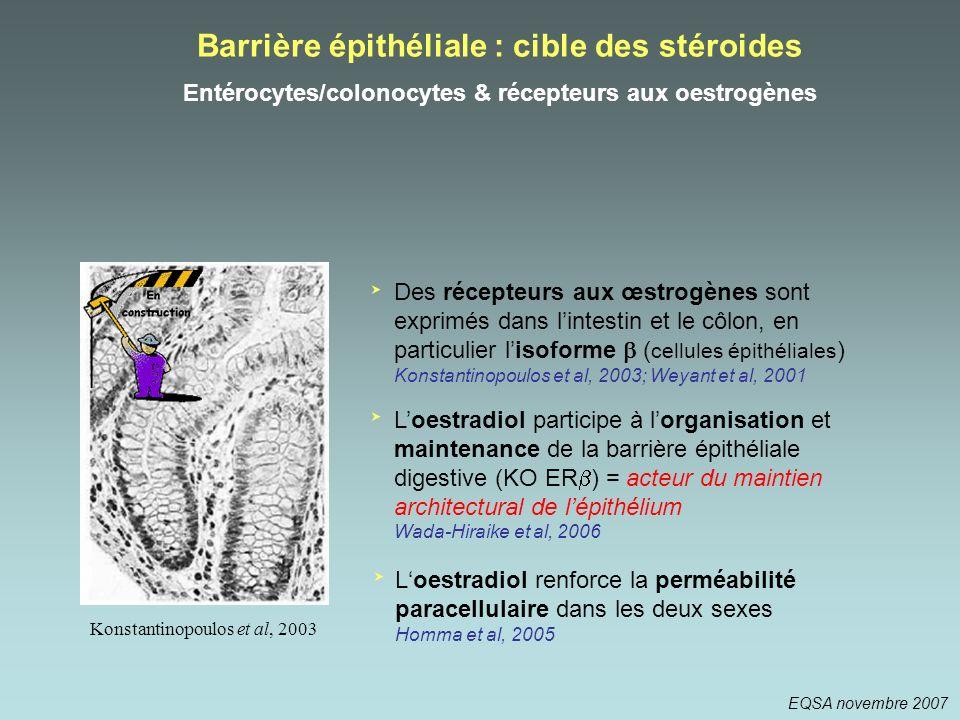 Barrière épithéliale : cible des stéroides