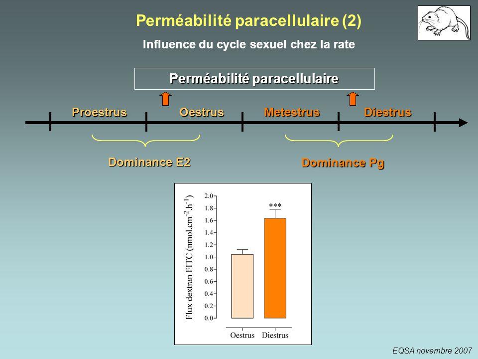 Perméabilité paracellulaire (2)