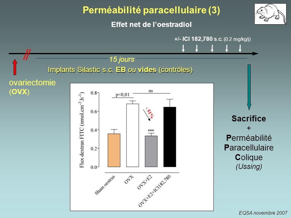 Perméabilité paracellulaire (3) Effet net de l'oestradiol
