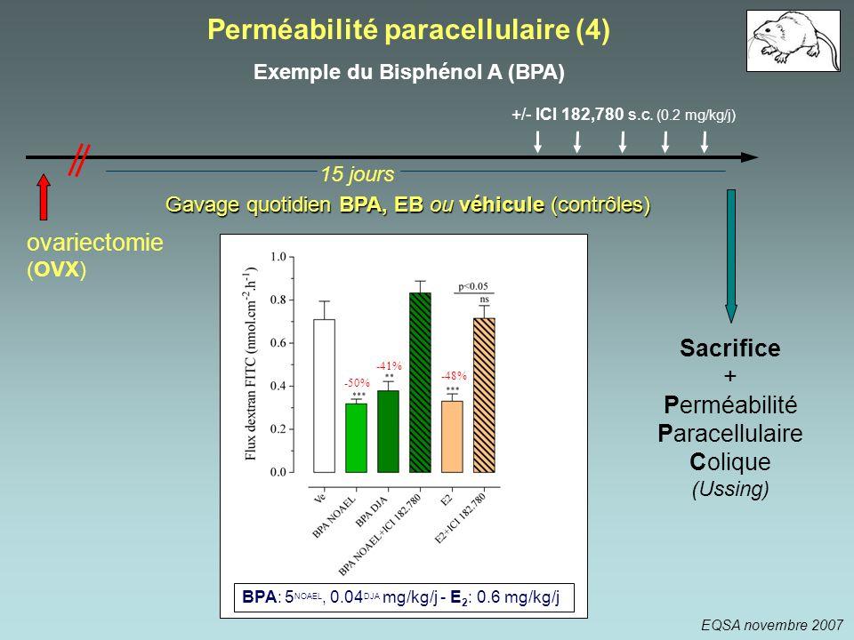 Perméabilité paracellulaire (4) Exemple du Bisphénol A (BPA)