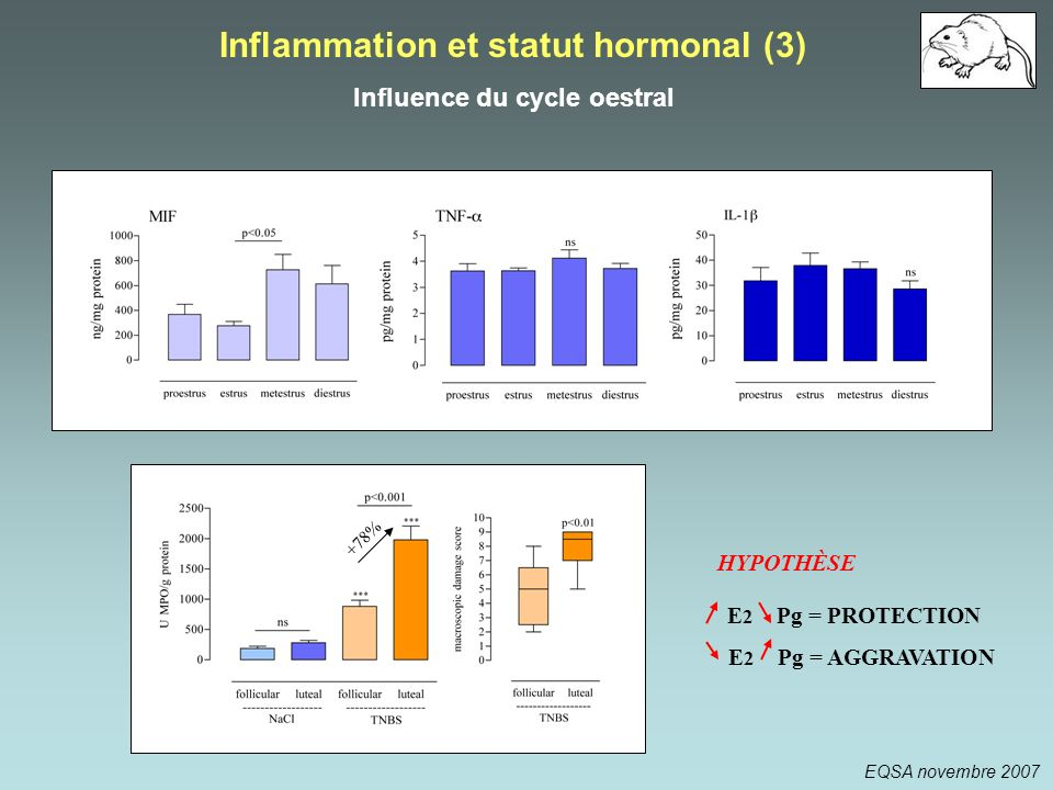 Inflammation et statut hormonal (3) Influence du cycle oestral