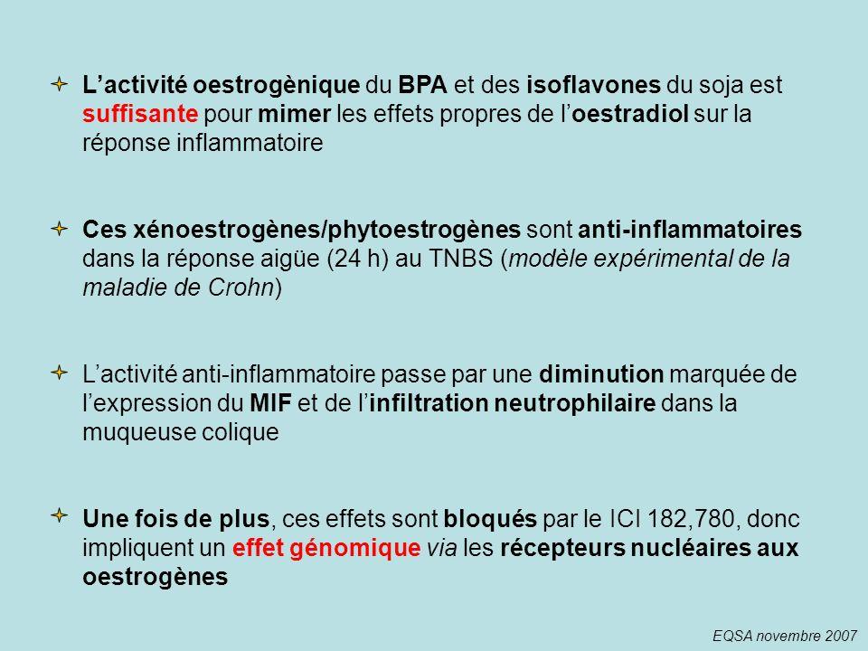 L'activité oestrogènique du BPA et des isoflavones du soja est suffisante pour mimer les effets propres de l'oestradiol sur la réponse inflammatoire