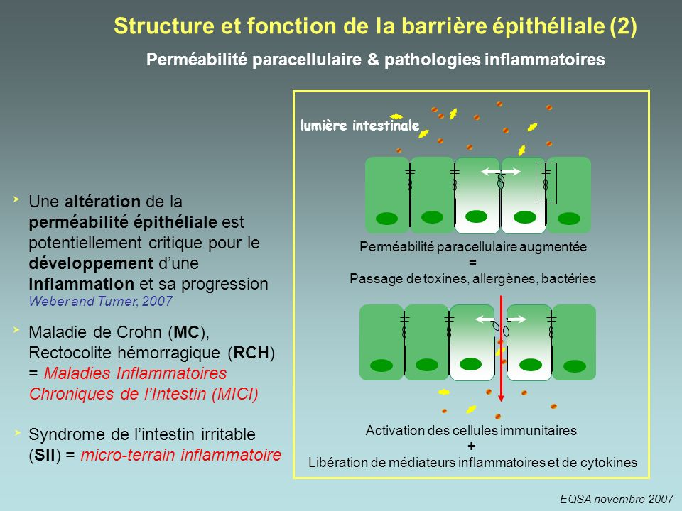 Structure et fonction de la barrière épithéliale (2)