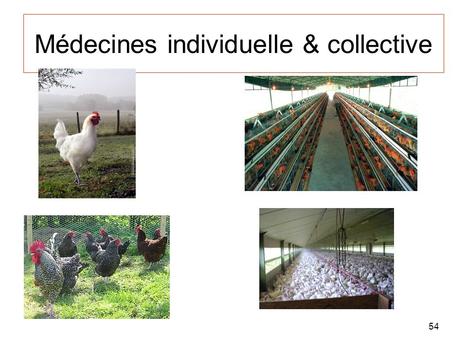 Médecines individuelle & collective