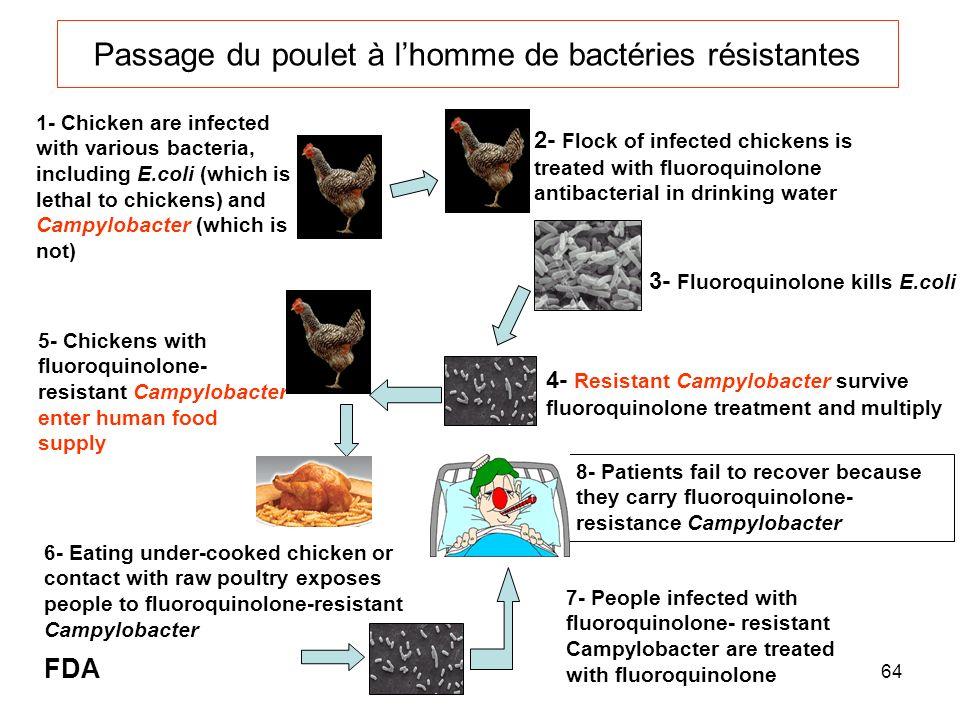 Passage du poulet à l'homme de bactéries résistantes