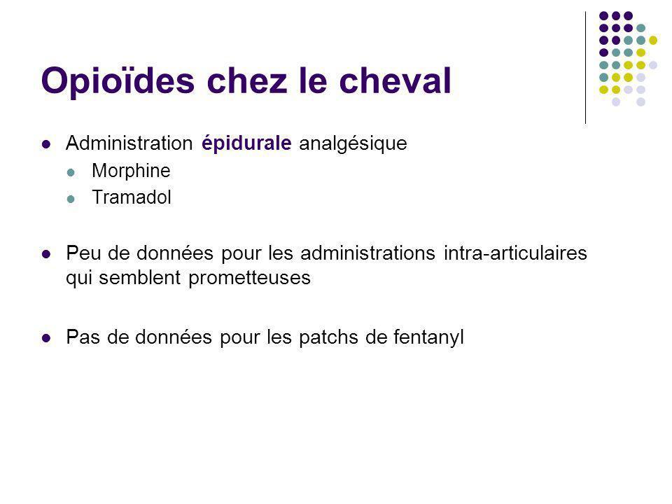 Opioïdes chez le cheval