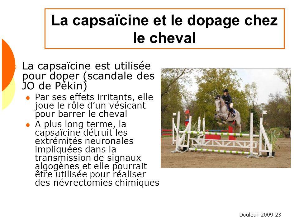 La capsaïcine et le dopage chez le cheval