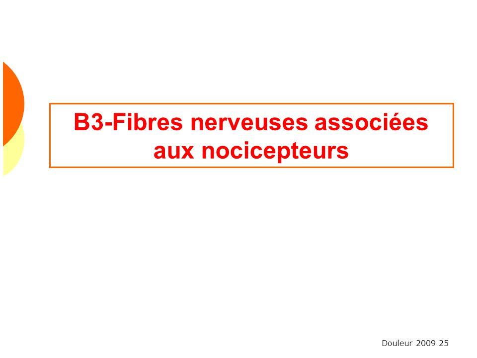 B3-Fibres nerveuses associées aux nocicepteurs