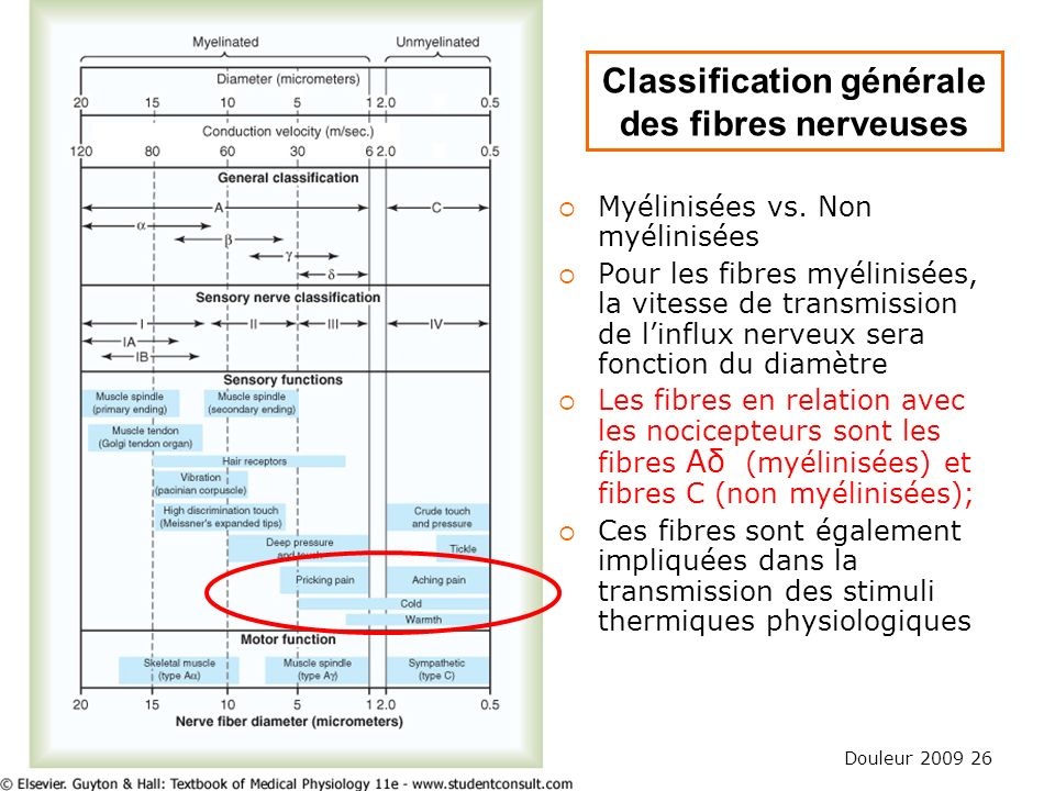 Classification générale des fibres nerveuses