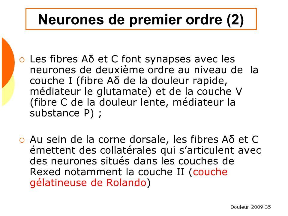 Neurones de premier ordre (2)