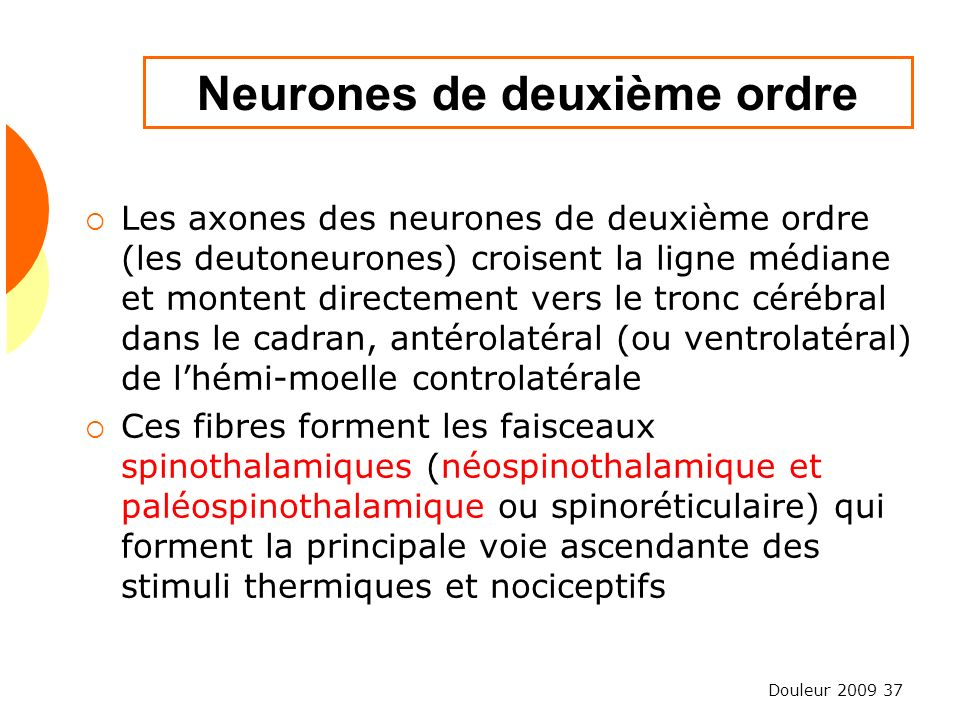 Neurones de deuxième ordre