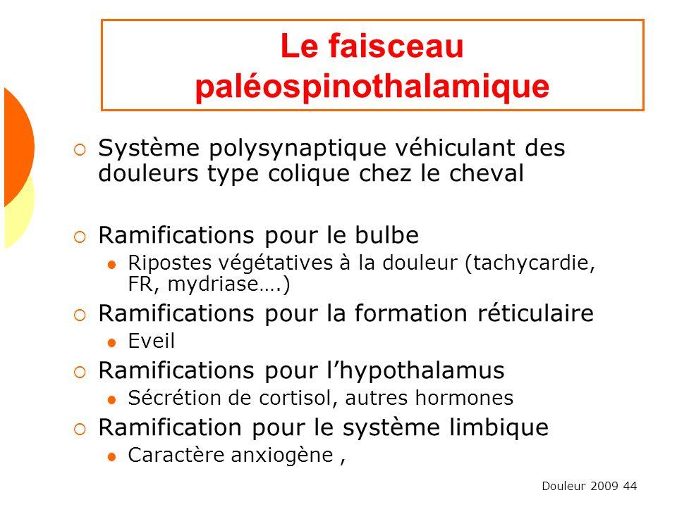 Le faisceau paléospinothalamique
