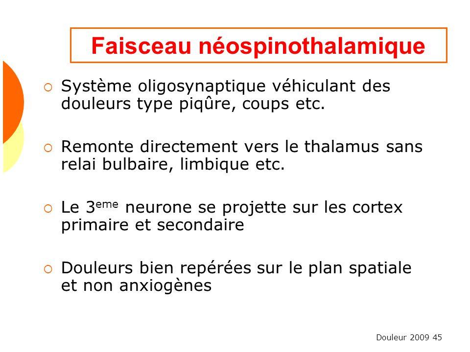 Faisceau néospinothalamique