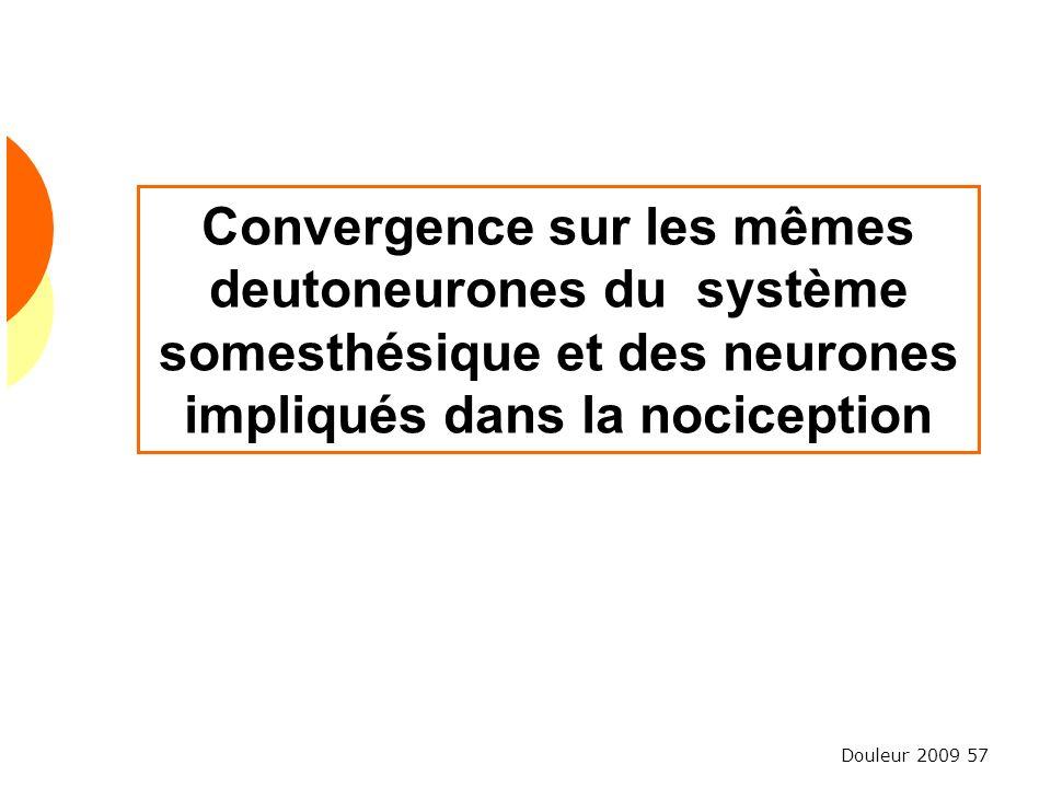Convergence sur les mêmes deutoneurones du système somesthésique et des neurones impliqués dans la nociception