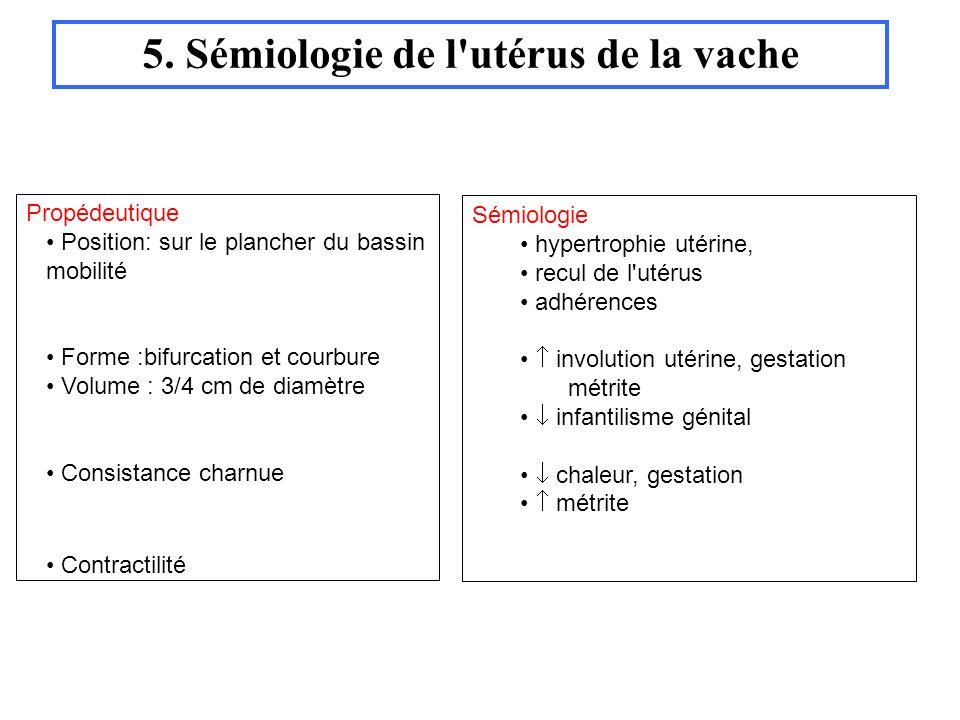 5. Sémiologie de l utérus de la vache