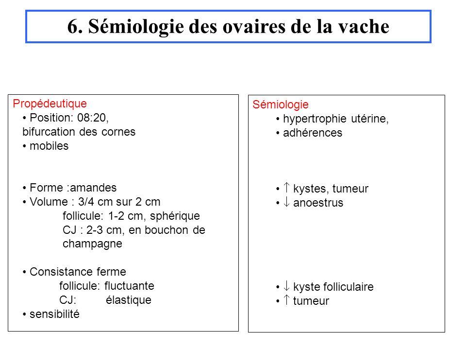 6. Sémiologie des ovaires de la vache