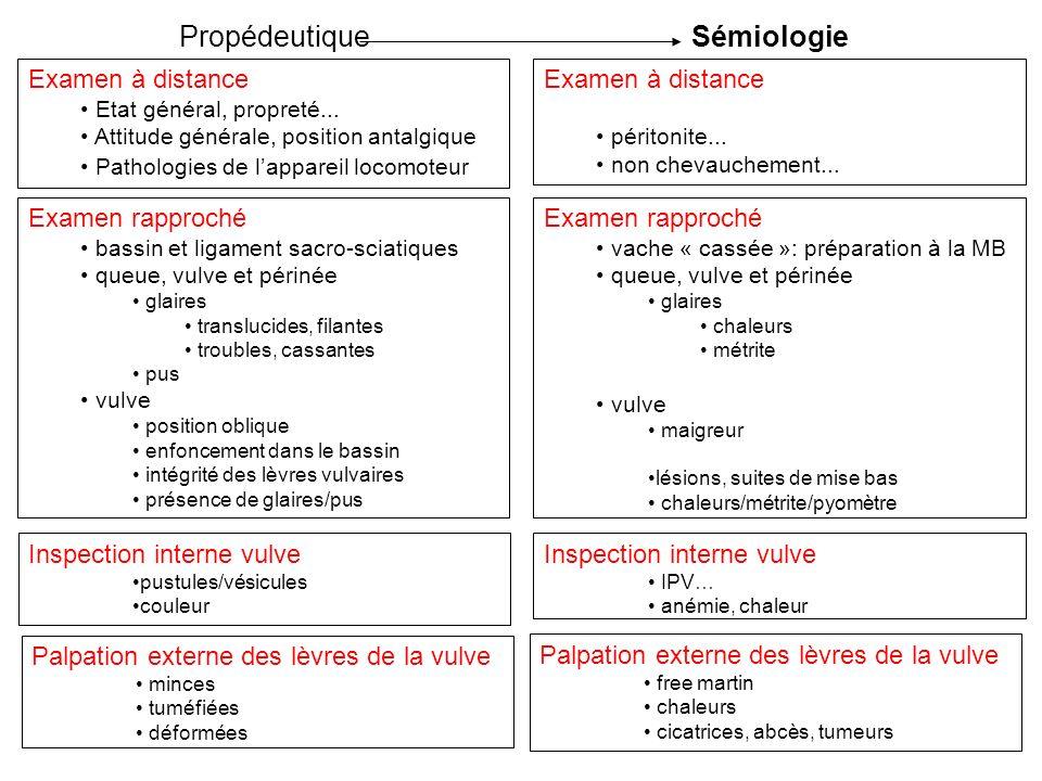 Propédeutique Sémiologie Examen à distance Examen à distance