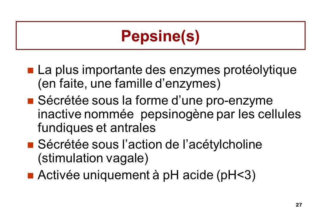 Pepsine(s) La plus importante des enzymes protéolytique (en faite, une famille d'enzymes)