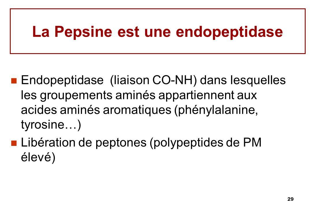 La Pepsine est une endopeptidase
