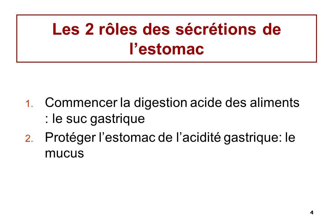 Les 2 rôles des sécrétions de l'estomac