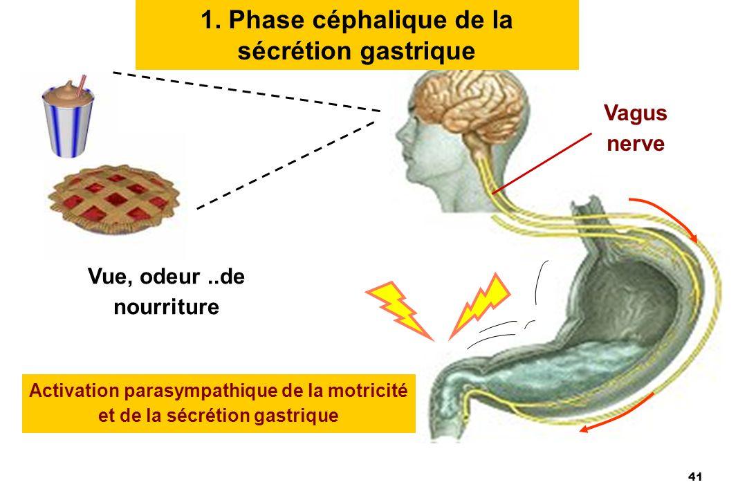 1. Phase céphalique de la sécrétion gastrique