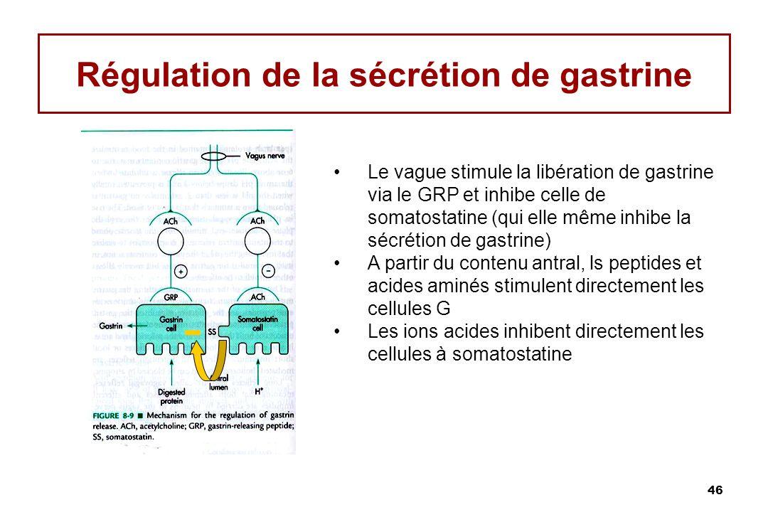 Régulation de la sécrétion de gastrine