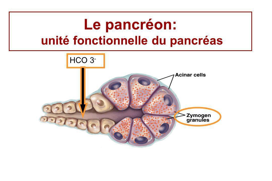 Le pancréon: unité fonctionnelle du pancréas