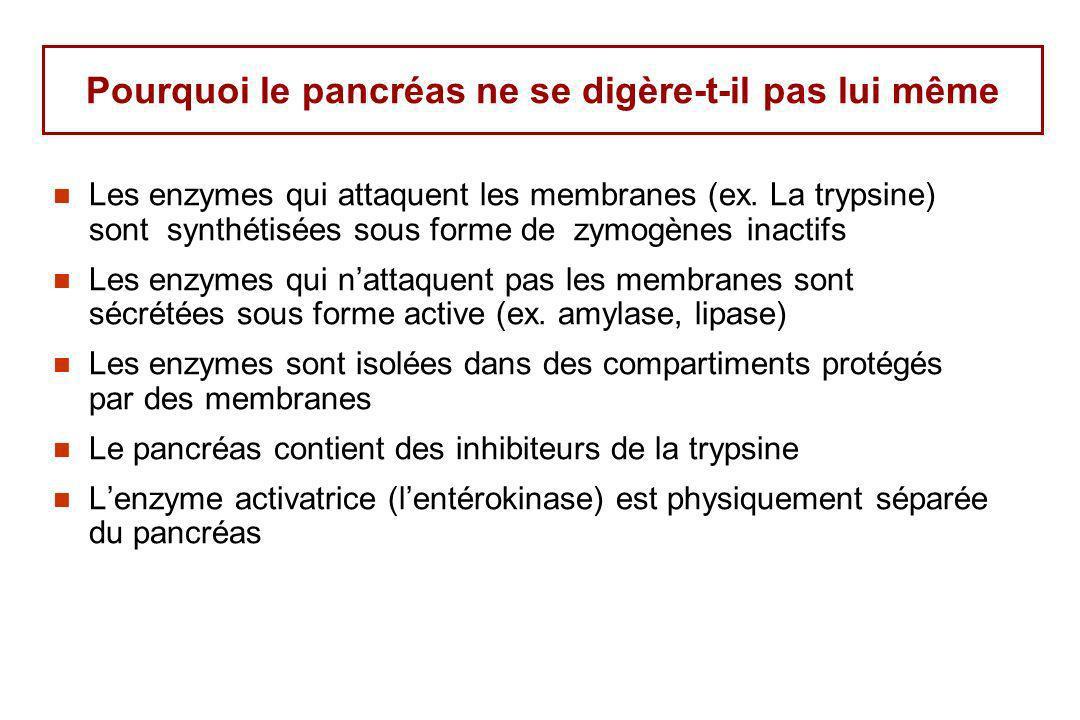 Pourquoi le pancréas ne se digère-t-il pas lui même