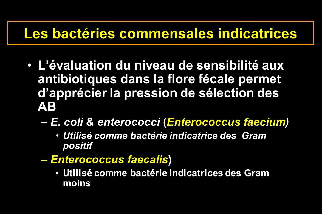 Les bactéries commensales indicatrices