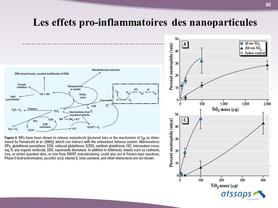 Les effets pro-inflammatoires des nanoparticules
