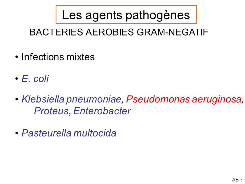 Les agents pathogènes Infections mixtes E. coli