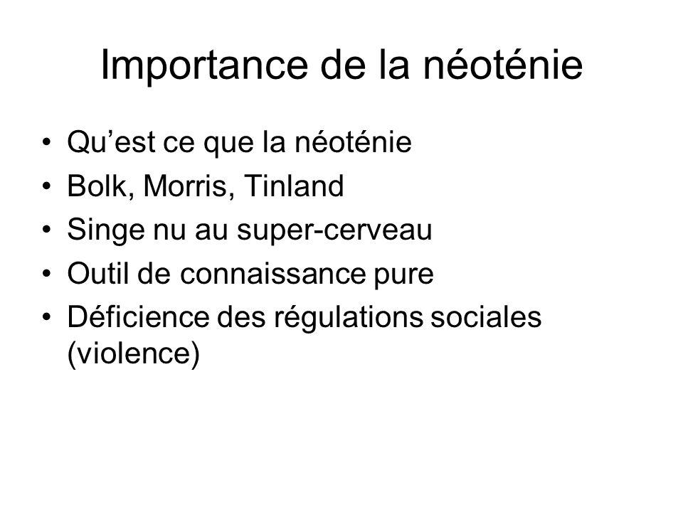 Importance de la néoténie