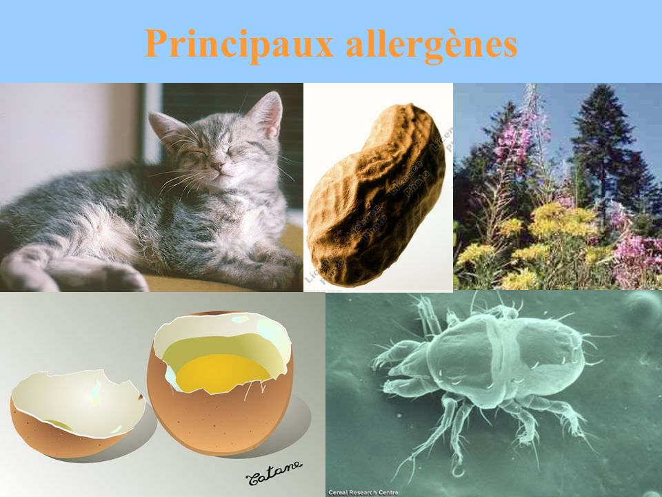 Principaux allergènes