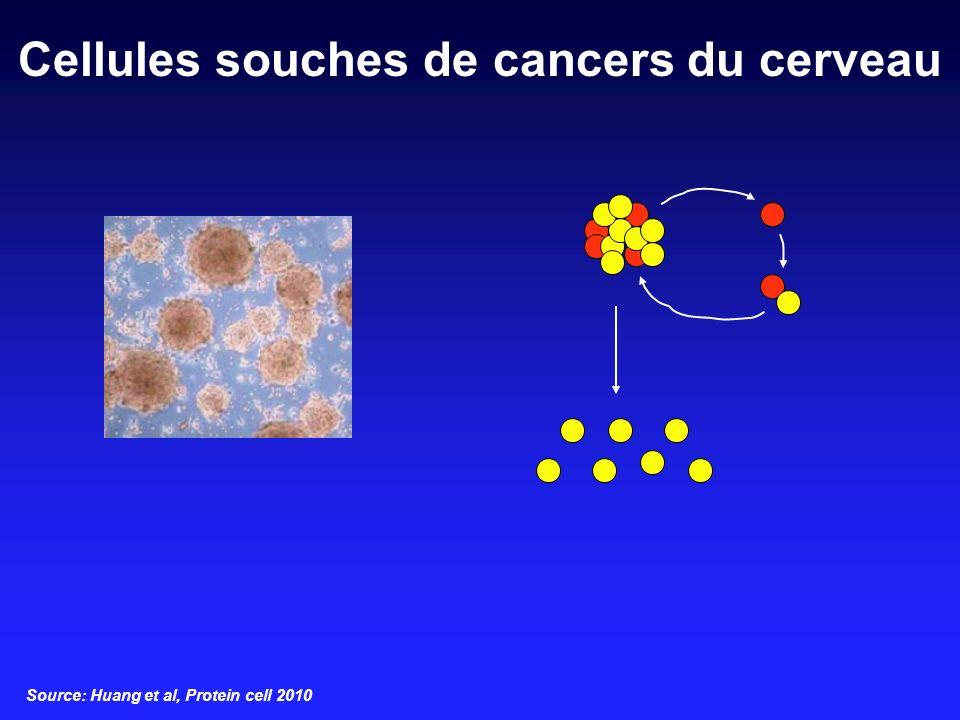 Cellules souches de cancers du cerveau