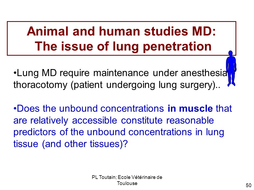 Animal and human studies MD: The issue of lung penetration