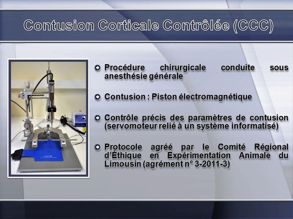 Contusion Corticale Contrôlée (CCC)