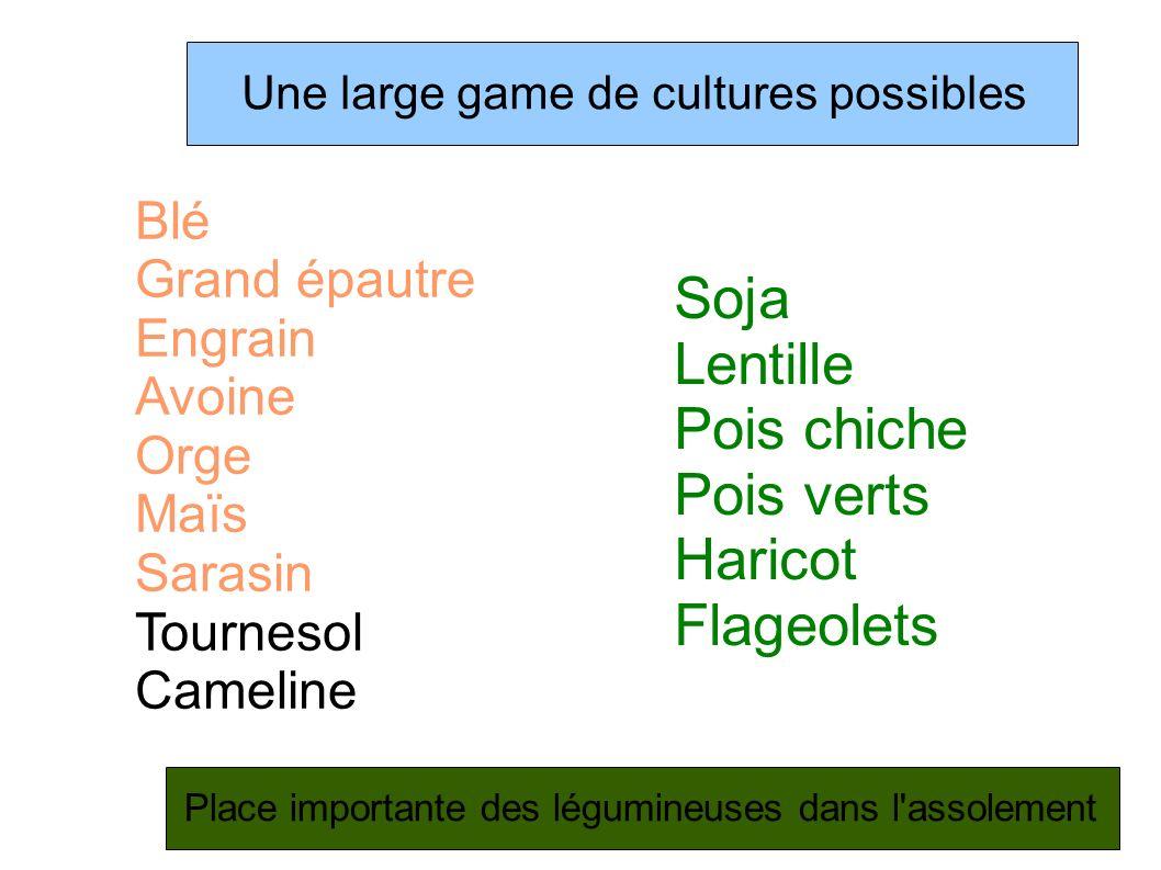 Soja Lentille Pois chiche Pois verts Haricot Flageolets Blé